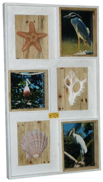Designing Dog Studio, LLC - Florida Series Shell-Photo Collage Frames